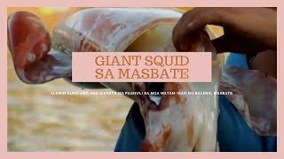 'Brigada': Mga giant squid, huli sa Masbate
