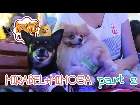 ตะลอนทัวร์กับตัวแสบ - Mirabel & Mimosa 2