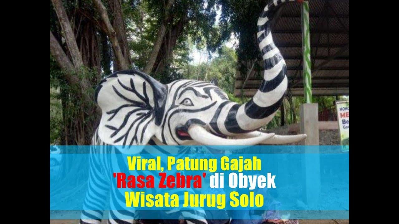 Viral Patung Gajah Rasa Zebra Di Obyek Wisata Jurug Solo Jadi Perbincangan Netizen