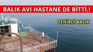 Zehirli Balık Hastanelik etti ! Lrf Balık Avı