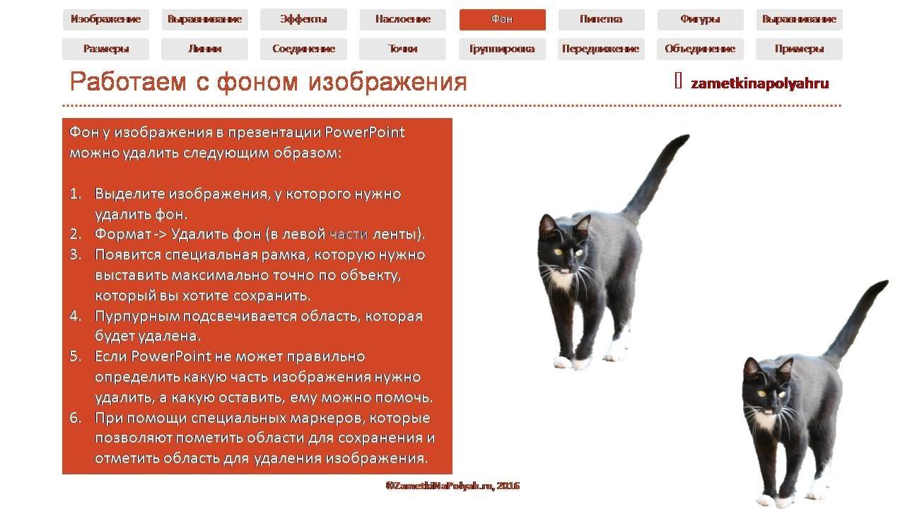 Как удалить фон картинки / изображения в PowerPoint 2016