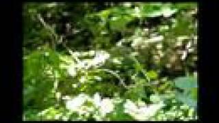 昆虫大冒険 メスアカミドリシジミ 鮭川村