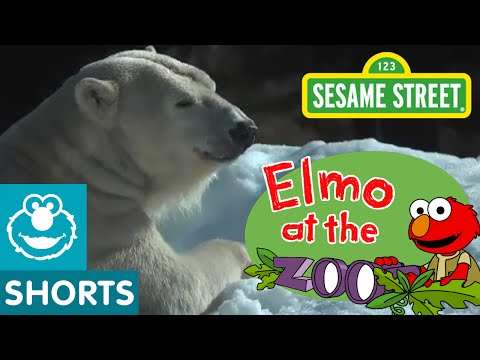 Sesame Street: What Makes Each Animal Unique? (Elmo At The Zoo #9)