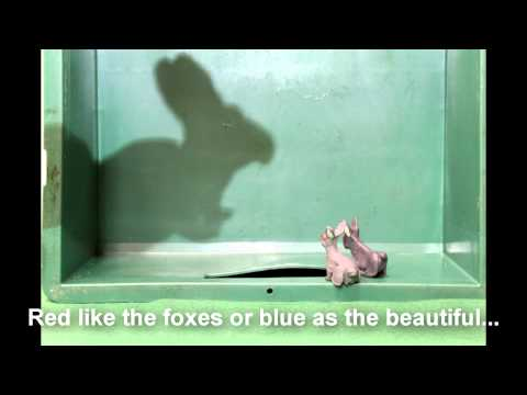 Lühifilm noortevahetusest Forest Tales: The Uncurables