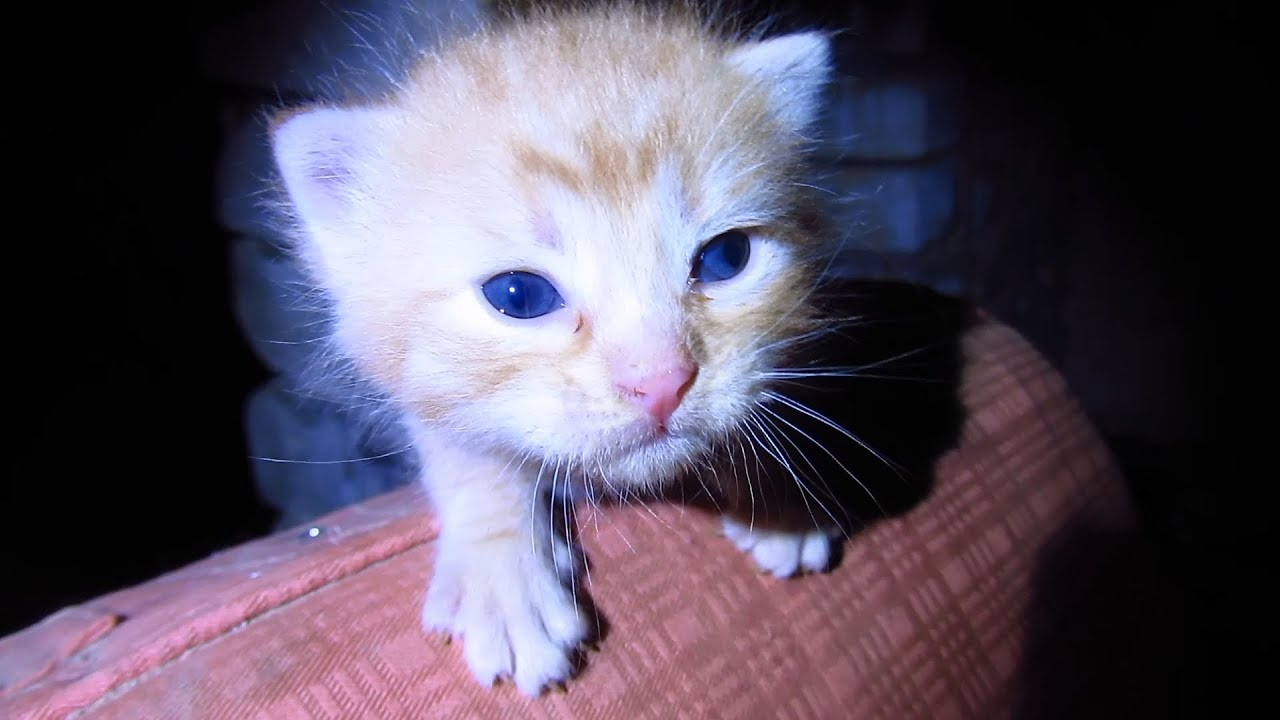 how to raise kittens from birth without mother