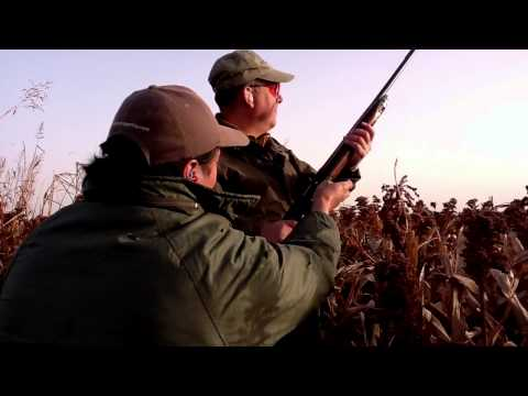 Argentina Dove Hunting, See The Fast Action Of A Cordoba Dove Hunt