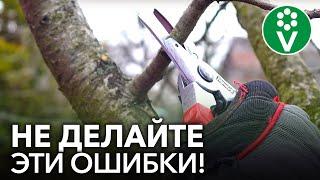 КЛАССИЧЕСКИЕ ОШИБКИ ПРИ ОБРЕЗКЕ плодовых деревьев, которые совершают все начинающие садоводы