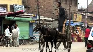 Taanga: Traditional Transport on the streets of Srinagar