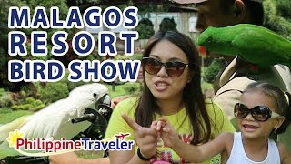 Interactive Bird Show at Malagos Garden Resort