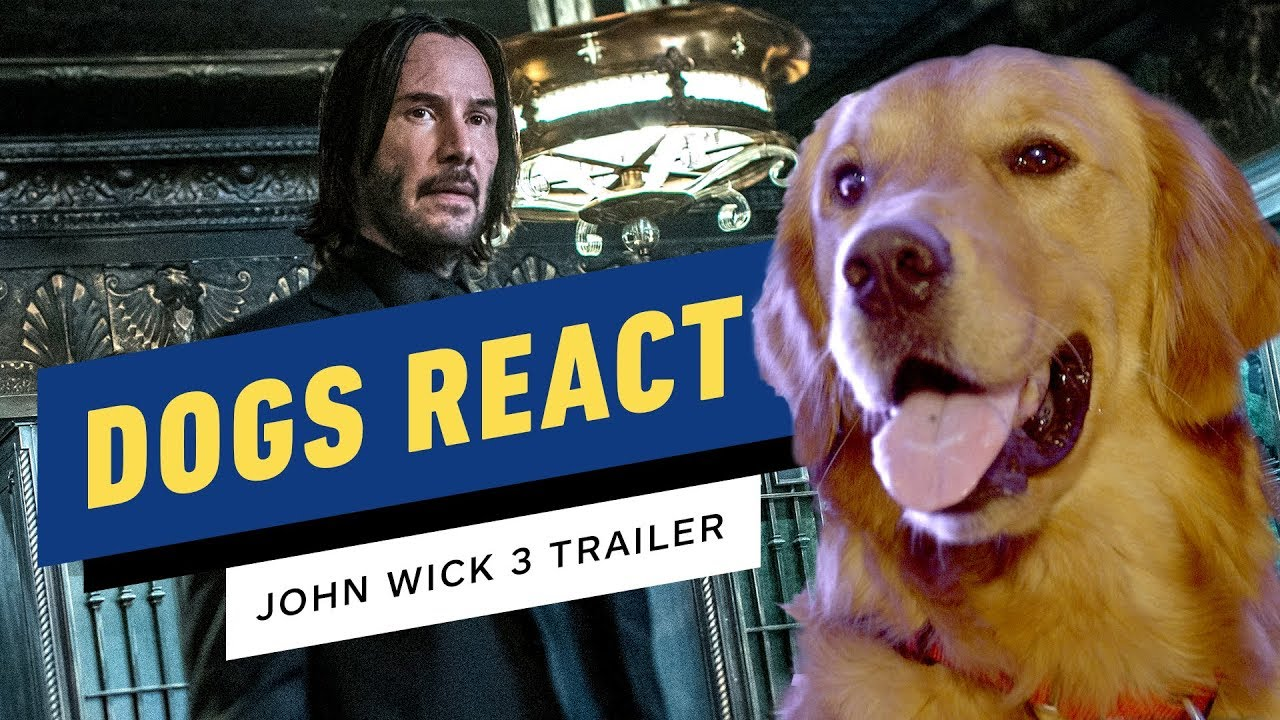 Dogs React To The John Wick 3 Trailer Youtube