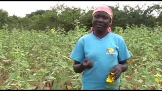 Training in beekeeping helps Betty pay her school fees