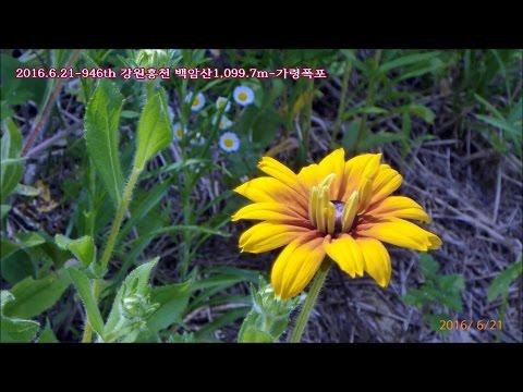 서울청암 Alpine club  Mountain2016 (1~6월) [Geum jandee 금잔디-오라버니...7]
