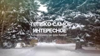 Зверский бой Мангуста против Черной Мамбы видео 2016