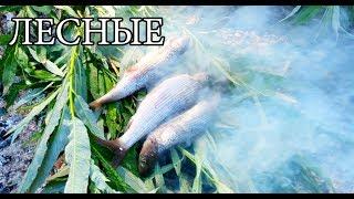 ГОРЯЧЕЕ КОПЧЕНИЕ РЫБЫ и РЫБА В УГЛЯХ - Примитивная кухня | Бушкрафт посуда | FISH IN COALS