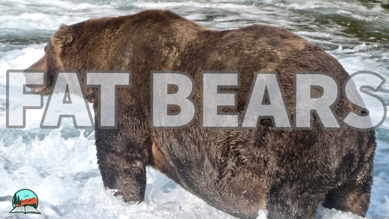 Fat Bear Week is back: Do you have your brackets ready?
