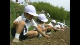 「ガンバレひまわりやまたきっこ畑」活動報告ビデオ2