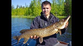 Трофейная рыбалка  в Карелии 2017. Хороший судак , крупная щука.