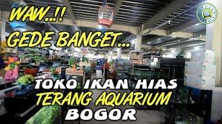 Toko ikan hias Terang Aquarium Bogor