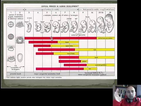 Влияние вредных факторов на плод - тератогены (от беременности до родов) - 1