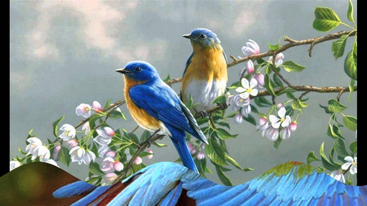 Bird Of Paradise Hd Wallpaper مثل طير Quot كناري Quot تصميم رائع مع الكلمات Youtube
