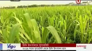 Sugar beet can be alternative of sugarcane (24-07-2017)