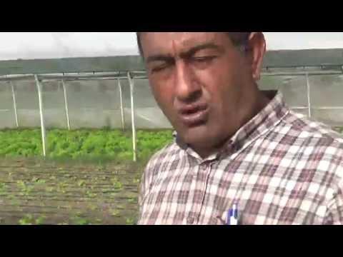 serada  marul  salatalık  roka  marul  tere otu  toprak düzenleyici  hastalıklar ile mücadele