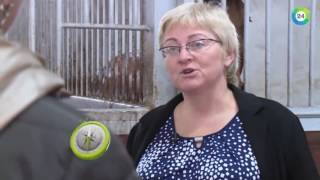 видео RTG TV TOP10 - Калининградская область. Достопримечательности