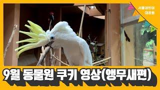 [서울어린이대공원 동물원] 9월 쿠키 영상(앵무새편)썸네일