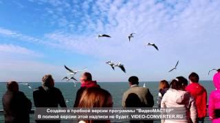 ЧАЙКИ. Автор Юрий Теслев