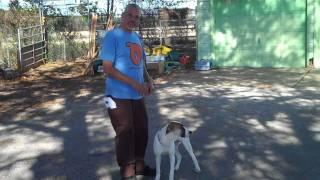 Casita Big Dog Rescue #5 - Benson At The Shelter