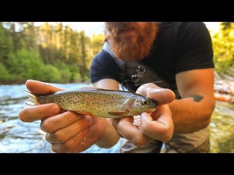 Fly Fishing for Cutthroat trout in the Boulder River, Montana- Day 2