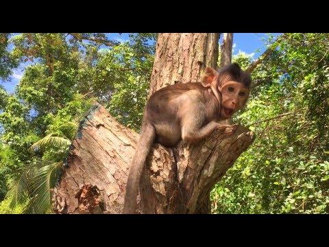 Mandala Monkey Big Eyes Monkey/Wonderful Nature After Raining For Monkeys Life/