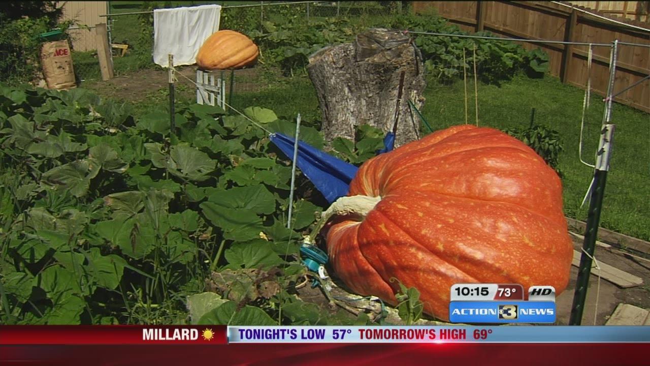 Biggest Pumpkin In The World