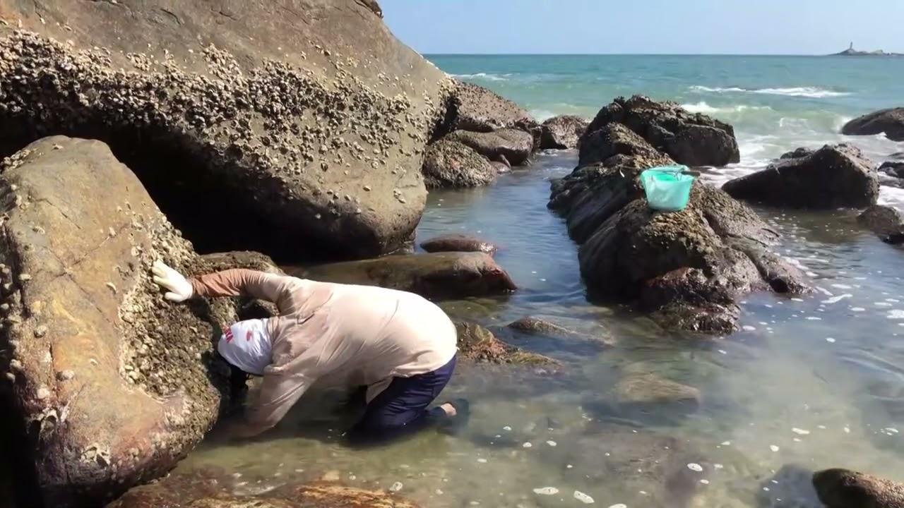 礁石缝里藏着好多螃蟹 ,闲牛伸手进去抓给夹得大叫,这样赶海好爽