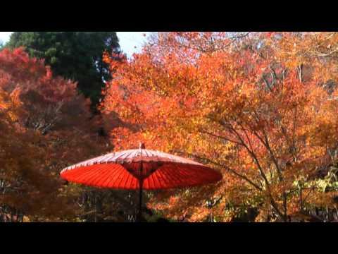 Autumn in jingo-ji