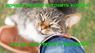 Download ПОЧЕМУ НЕЛЬЗЯ ОТГОНЯТЬ КОШКУ, КОГДА ОНА ТРЕТСЯ О ЧЕЛОВЕКА   Cat rubs against man Mp3 and Videos