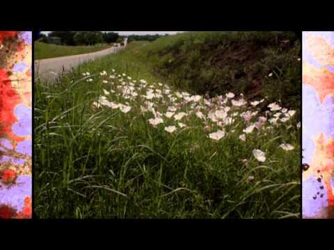 More Oklahoma Wildflowers