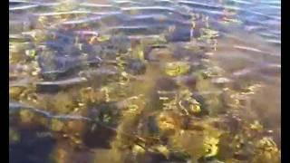 Дно Белого моря | мыс Кузокоцкий(Белое море, север Карелии, между великим и малым Кандалакшским заповедником. Дно Белого моря - мыс Кузокоцки..., 2012-01-04T10:39:24.000Z)