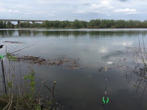 ловля воблы на поплавочную удочку