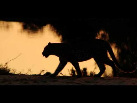 Black Panther - Schwarze Panther
