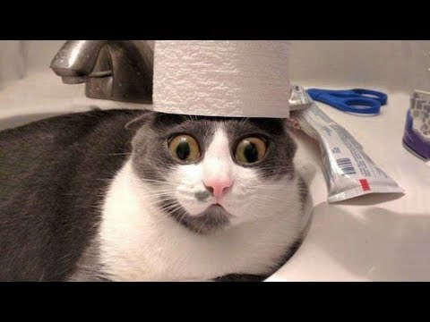 Funniest  Cats and  Dogs  Awesome Funny Pet Animals Life Video