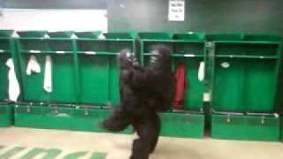 gorillas gone wild.mp4