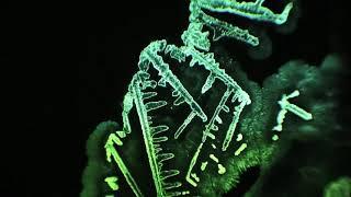 Six Fingered People - Spores (Bent Breaker - Remix)
