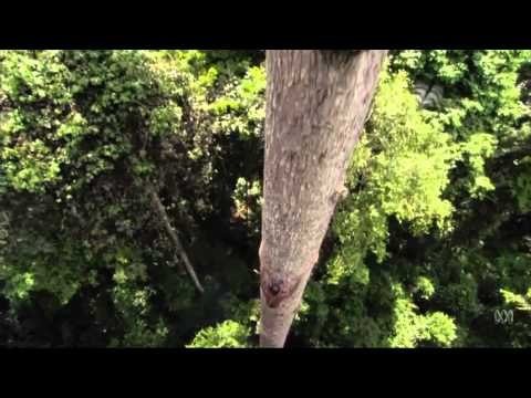 Human Planet | Jungles: Pygmy Honey Hunting | Sundays,  7.30pm, ABC1