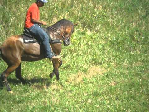 Resultado de imagem para queda de cavalo na roça