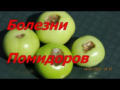 Болезни помидоров. Toмат фото.Огород Баварский. Почему гниют томаты.
