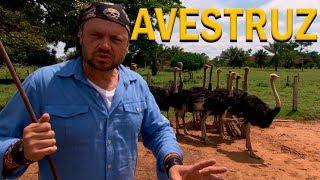 #11 EXPEDIÇÃO AMAZÔNIA | NA TRILHA DO AVESTRUZ | RICHARD RASMUSSEN