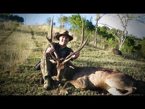 Hunting Rusa deer in New Caledonia part 31