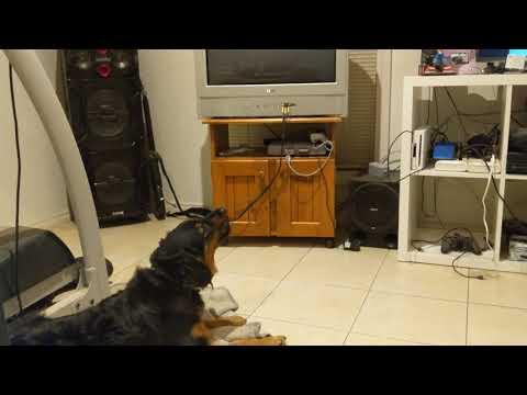 Dog Howling to Star Trek Voyager