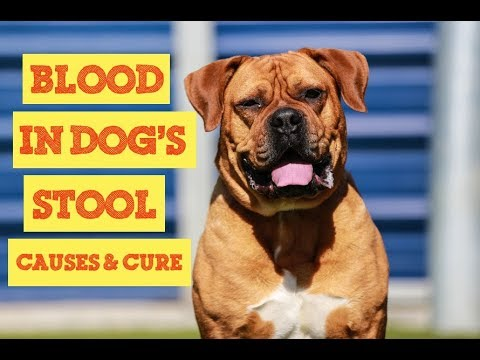 15 Facts About Blood In Dogs Stool You Must Know